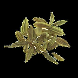 Fennikel spirefroe FRISKE SPIRER