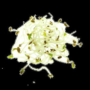 Lucerne Alfalfa 3 dage spirer FRISKE SPIRER