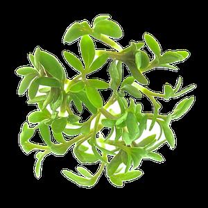 Karsespirer af økologiske spirefrø