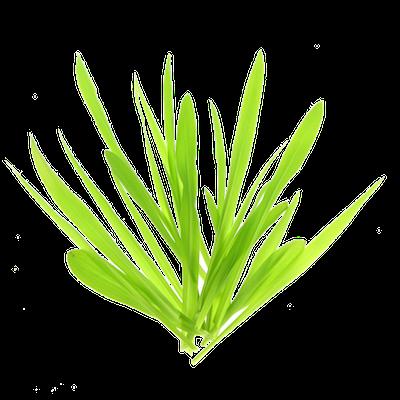 Oekologiske Majsspirer af korn fra FRISKE SPIRER